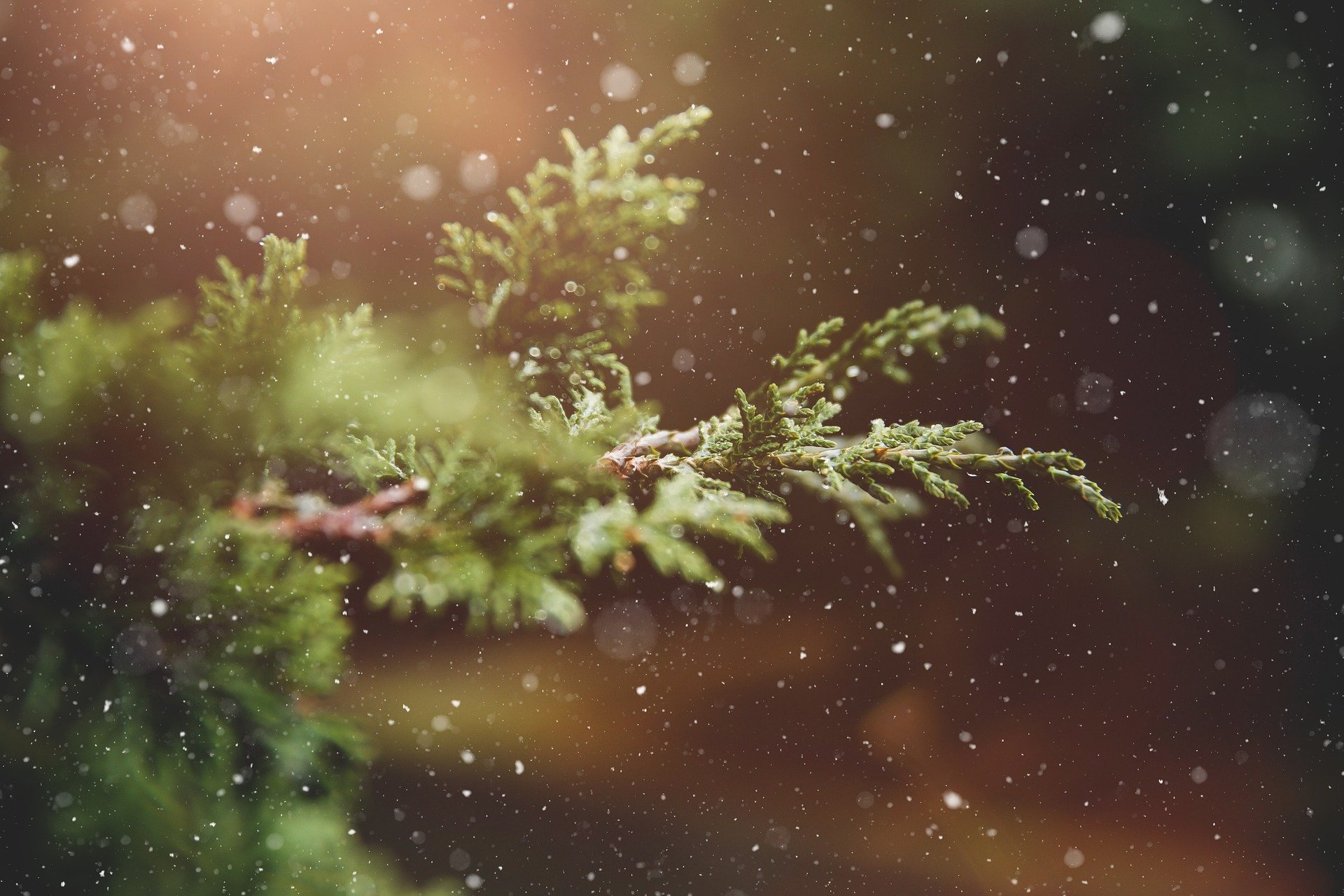Advent Resources for You